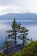 Preview iPhone wallpaper Lake Tahoe, Nevada, USA, trees, plants