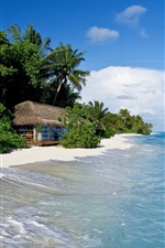 Maldives, tropical, sea, beach, palm trees, hut