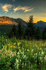 Preview iPhone wallpaper Nature landscape, mountains, wildflowers, trees, dawn