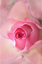 Preview iPhone wallpaper Pink flower, rose, bud, petals, flare