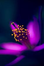 Flor roxa, pétalas, macro fotografia, fundo preto