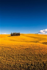 Preview iPhone wallpaper Siena, Italy, Montalcino, summer, trees, fields