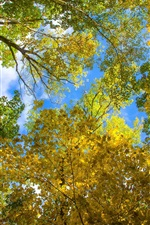 Sky, leaves, autumn, trees