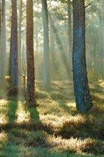 Preview iPhone wallpaper Spring, forest, grass, sunlight, morning
