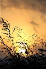 Preview iPhone wallpaper Sunset, grass, plant