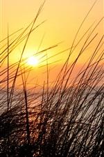 Preview iPhone wallpaper Sunset, grass, river