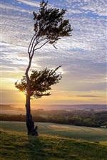 Sunset, tree, grass, sky, clouds