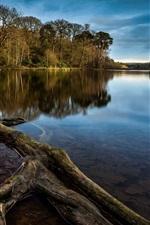Toco de árvore, lago, árvores