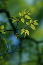Preview iPhone wallpaper Twigs, bokeh, green leaves