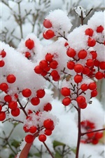 Preview iPhone wallpaper Twigs, snow, winter, red berries