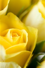 Preview iPhone wallpaper Yellow flowers, roses, buds, close-up photo