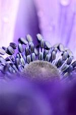 미리보기 iPhone 배경 화면 말미잘, 보라색 꽃잎, 물방울, 매크로 포커스