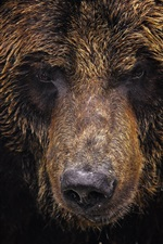 Preview iPhone wallpaper Animal close-up, bear, grizzly bear, face