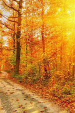 Preview iPhone wallpaper Autumn, forest, road, trees, red leaves, sunlight