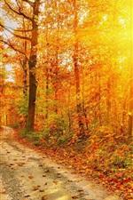 Outono, floresta, estrada, árvores, folhas vermelhas, luz solar