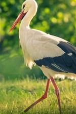 Preview iPhone wallpaper Bird in the grass, stork, summer