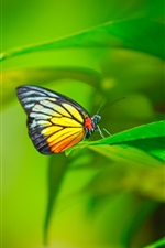 Preview iPhone wallpaper Butterfly, insect, plant, green leaves