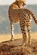 Preview iPhone wallpaper Cheetah, family, cub, grass, look