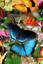 Preview iPhone wallpaper Collage, many butterfly, insect
