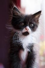 Preview iPhone wallpaper Cute kitten, black white, bokeh