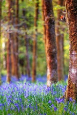 England, forest, trees, blue flowers, nature landscape