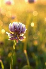 Flowers, bokeh, sunlight, morning