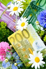 Preview iPhone wallpaper Flowers, cornflowers, chamomile, money, Euro