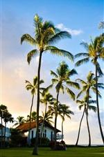 Preview iPhone wallpaper Hawaii, Kauai, beautiful scenery, palm tree, summer, house