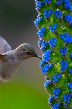 Preview iPhone wallpaper Hummingbird, blue flowers, bee