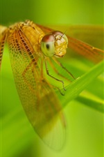 Preview iPhone wallpaper Insect close-up, dragonfly, wings, grass