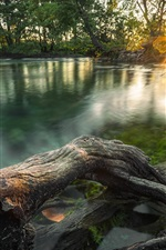 Preview iPhone wallpaper Jungle river, trees, morning, sunlight