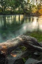 Vorschau des iPhone Hintergrundbilder Jungle Fluss, Bäume, Morgen, Sonnenlicht