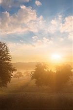 Preview iPhone wallpaper Morning, fog, sunrise, trees