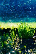 Preview iPhone wallpaper Nature, grass, weed, bokeh, green