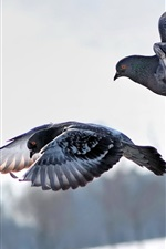 Preview iPhone wallpaper Pigeons, flight, couple