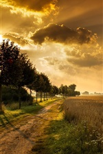 Preview iPhone wallpaper Sunset, road, trees, fields