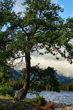 Tree, lake, mountains, nature landscape