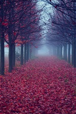 Preview iPhone wallpaper Trees, red leaves, road, fog, autumn