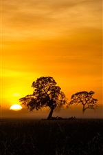 Preview iPhone wallpaper Trees, sunrise, fog, mist, silhouette, Penola