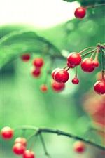 iPhone обои Ветки, красные ягоды, листья, размытость