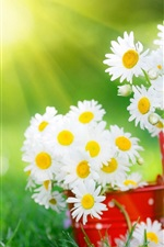 Preview iPhone wallpaper White daisy flower, cup, grass, summer, sunlight