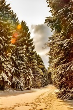 Preview iPhone wallpaper Winter, snow, trees, forest, trails