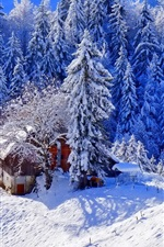Preview iPhone wallpaper Winter, thick snow, trees, house, footpath