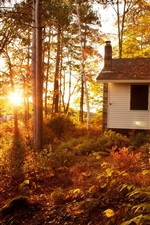 Autumn landscape, forest, trees, sunset, house
