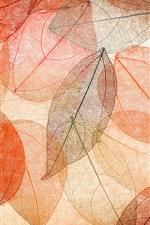 Outono, folhas transparentes, abstrato, colorido