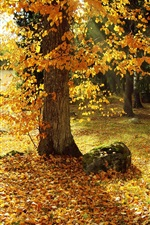 Preview iPhone wallpaper Autumn, trees, yellow leaves, path, sun rays
