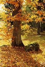 Autumn, trees, yellow leaves, path, sun rays