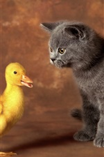 Preview iPhone wallpaper Black cat with yellow duck