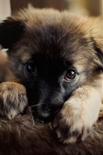 Cão bonito, filhote de cachorro, olhar para você
