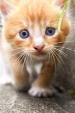 Preview iPhone wallpaper Cute kitten, look, furry